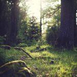10 Rozhodnutí, Ktoré Oľutuješ v Najbližších 10-tich Rokoch